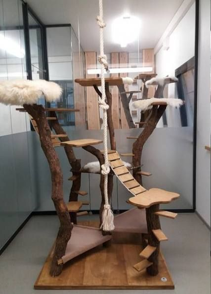 Cats House Indoor 23 Ideas Outdoorcatplaygrounds Kat Krabpaal Kattenkamer Kattenmeubels