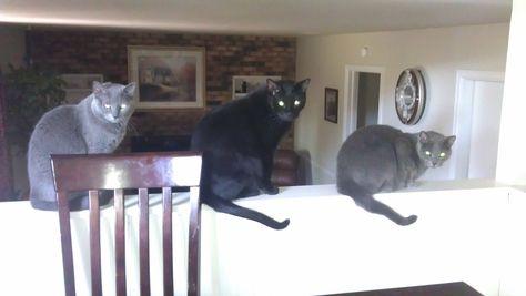 Ruby, Fat Cat, Jade
