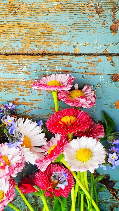 53 Ideas For Flowers Wallpaper Iphone Summer With Images
