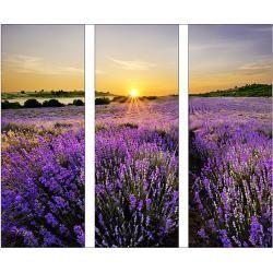 Glasbilder Glasbild Beautiful Lavender 3 Tlg Is 30 X 80 Cm