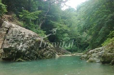 Babol and Amol Forests – Amol Iran tourism Forest Tourism