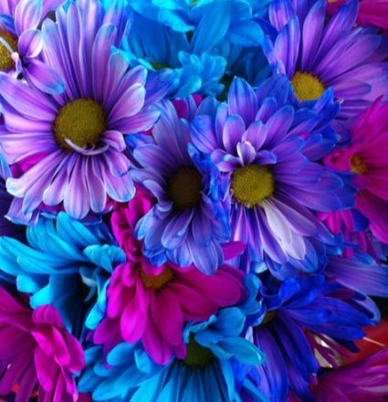 52 Best Ideas Flowers Pink Blue Colour Flowers With Images