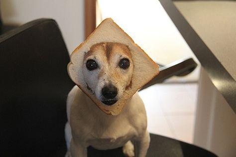 Inbred (In Bread) Dog