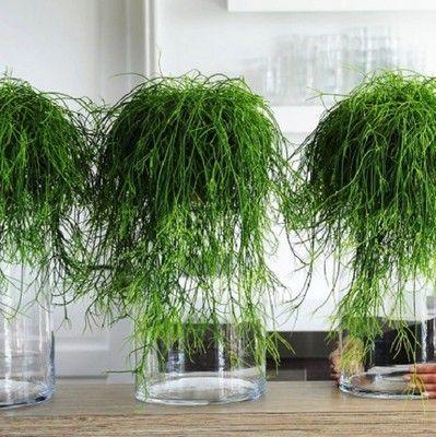 Przedmioty Uzytkownika Zielony Parapet Allegro Pl Interior Plants Plants Parapet