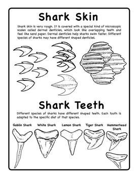 Sharks Rays Science Art Activities Shark Facts Shark