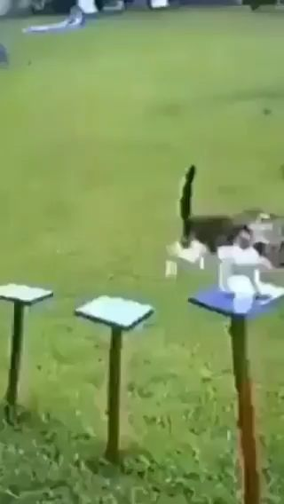 Check out this Cat's really amazing tightrope skills!