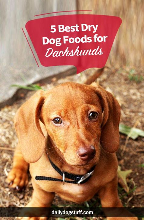 5 Best Dry Dog Foods For Dachshunds Best Dry Dog Food Dog Food