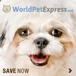 World Pet Express Is Your One Stop Certified Pharmacy For Cheap Pet Meds Online Without Prescription From The Vet We Serve U Pet Medications Pet Meds Pet Life
