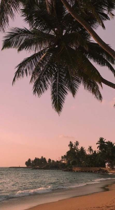15 Trendy Wall Paper Iphone Vintage Tumblr Summer Palm Trees