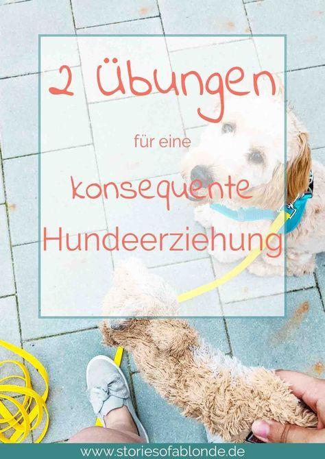 Konsequenz in der Hundeerziehung Hundeerziehung, Hunde