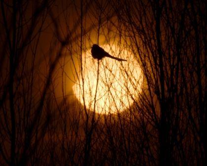 چشمم به تاریکی این شب آسوده گشته است اندازه قلم Sharefacebooktwitter 03 ارديبهشت 1398 1 2 3 4 5 Author سید مصطفی مصطفوی Beautiful Art Art Celestial