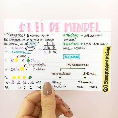 Biologia Primeira Lei De Mendel Resumosonhodam Biologia