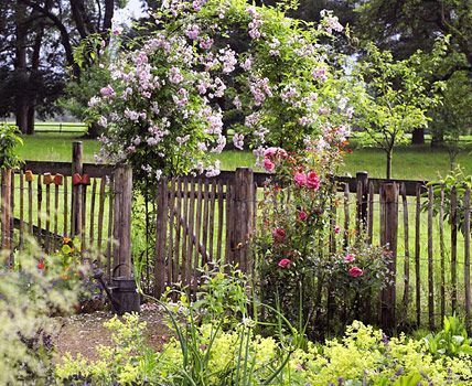 Plant The Garden Fence Colorfully With Images Cottage Garden Plants Cottage Garden Design