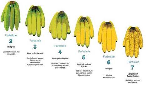 Darstellung_Reifegrade_Bananen