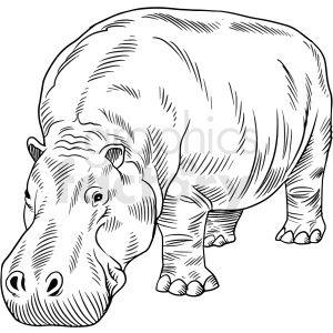 Hippopotamus clipart hippo animal, Hippopotamus hippo animal Transparent  FREE for download on WebStockReview 2020