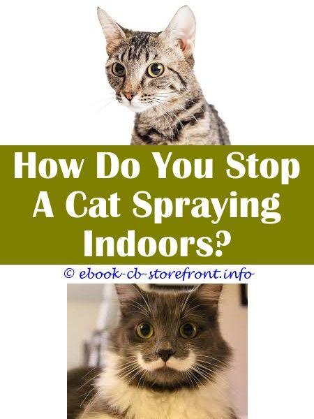 4 Stupefying Ideas Adams Flea And Tick Mist Spray For Cats Homemade Cat Repellent Spray For Garden Is Spraying Clorocs Near Cats Okay Why Do Neutered F Sensible