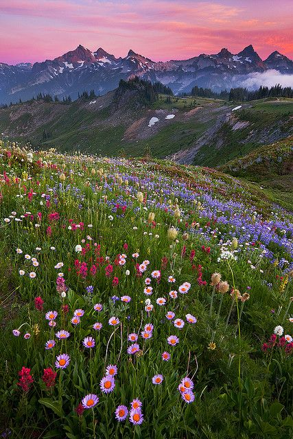 so beautiful - gorgeous mountains and flower field. Where is this amazing place? Nature Aesthetic, Flower Aesthetic, Beautiful World, Beautiful Places, Beautiful Gorgeous, Absolutely Gorgeous, Simply Beautiful, Landscape Photography, Nature Photography
