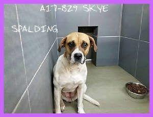 Dogs Spalding County Animal Shelter Dogs Animal Shelter Dog Adoption