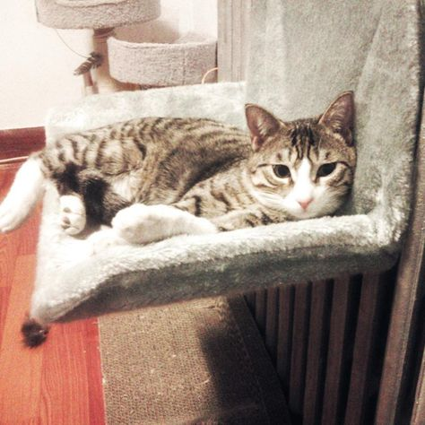 Description Our Removable Hammock Cat Bed not only can be used as a bed for pets to have a nap but also a dangling toy for added entertainment。 You don't have to worry about seasonal issues,Soft Coral Fleece fabric for cold winters, It is suitable for hot summers. Made of high-quality material, soft and comfortable, giving your pet a good sleeping. Sturdy cat window perch offers a soft comfortable feel,This bed will give the cat a great experience. We believe that cats will like it very much!Can