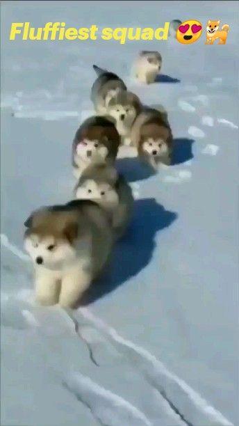 Fluffiest squad 😍🐕