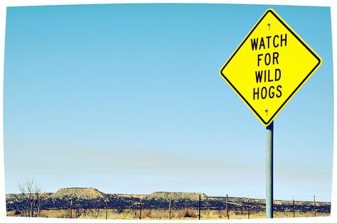 Watch for Wild Hogs Road Sign Rural West Texas Landscape | We watch for them here in Central TX, too.