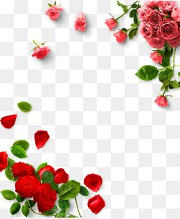 Rose Png Borda Rosa Decoracao De Fronteira Rosa Imagem Png E Psd Para Download Gratuito Clip Art Rose Clipart Clipart Images