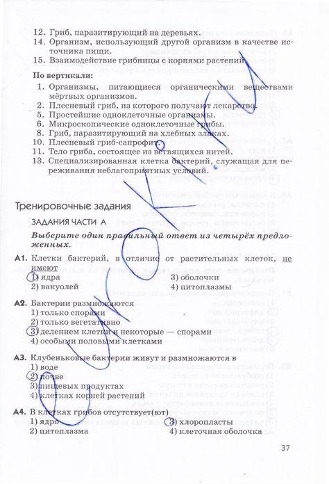 Онлайн учебник русского языка 3 класс 1 часть зеленена хохоева