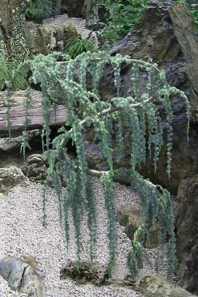 Wilson Bros Gardens Its Twisted Snake
