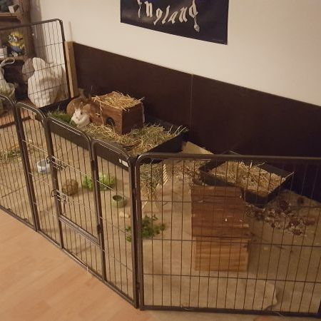 Innenhaltung Fotos Kaninchengehege Kaninchenhaltung Meerschweinchen Gehege