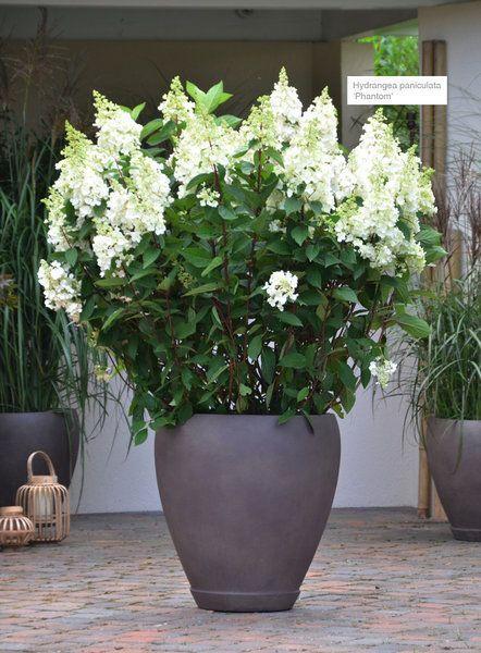 Asian Terrace Xxl Plants Plants Asian Plants Potted Plants Patio