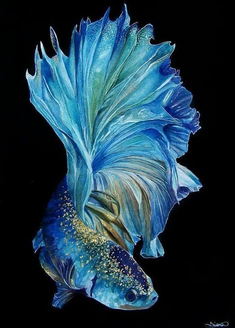Finding the best betta fish tank is quite a hassling job. This guide will help you to get the dream house for your betta. Betta Fish Types, Betta Fish Tank, Betta Fish Tattoo, Pretty Fish, Beautiful Fish, Beautiful Pictures, Beautiful Sea Creatures, Animals Beautiful, Colorful Fish