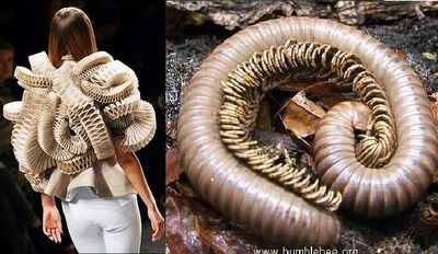 Fashion Clicks - Just click your way to fashion!: Inspired by Creepy Crawlers