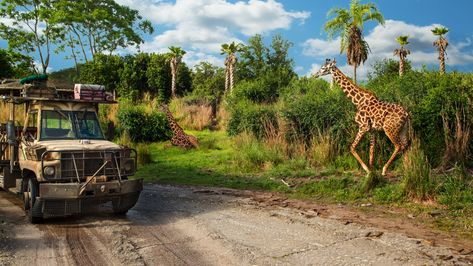 Kilimanjaro Safaris Animal Kingdom Attractions Animal Kingdom