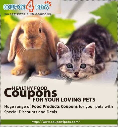 Pet Supermarket Discount Code >> Cartes Coupon Codes Discount Offers Coupon4pets Com
