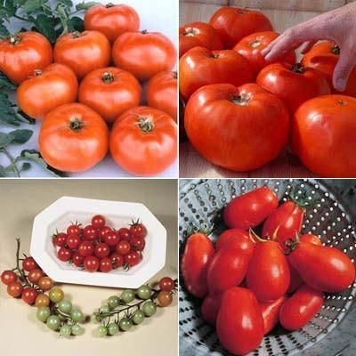 Secrets To Growing Tomatoes In Containers In 2020 Tomato Garden Tomato Seeds Growing Tomatoes In Containers