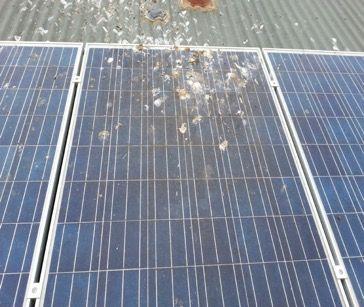 Birds And Solar Panels Solar Panels Solar Roof Solar Panel