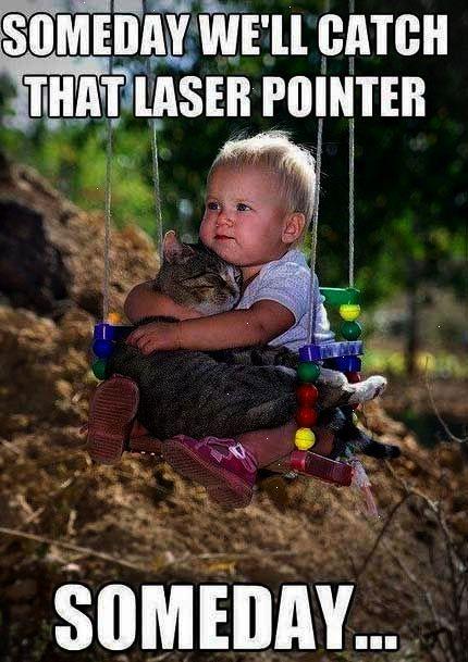 Someday Cute Memes Animals Cat Cats Adorable Kid Animal Kittens Pets Meme Kitten Funny Animals Funny Kids Cute Animals Pets Cute Kids