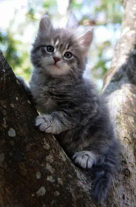 Cute Animals Good Night Images In Cats And Kittens For Sale Newcastle Beneath Cute Animals That Can Kill You Agains Kittens Cutest Pretty Cats Siberian Kittens