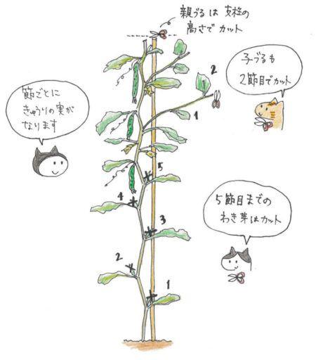 ボード きゅうり栽培 のピン