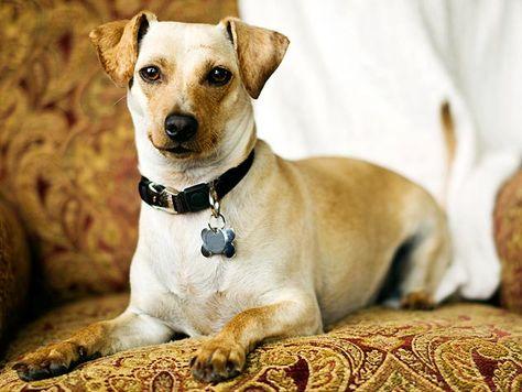 Christmas Rescue Dog Graphics 2021 82 Pet Adoption Ideas In 2021 Pet Adoption Adoption Pets