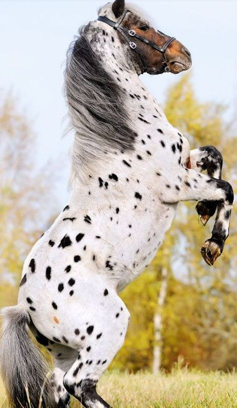 rare horses | Tumblr