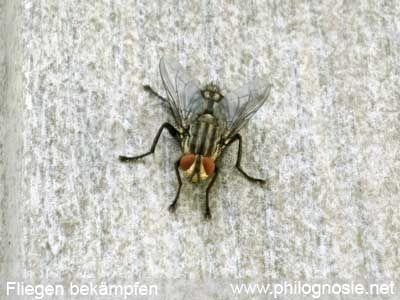 Fliegenplage Fliegen Aus Dem Haus Vertreiben Fliegen In Der Wohnung Kleine Fliegen Fliegen