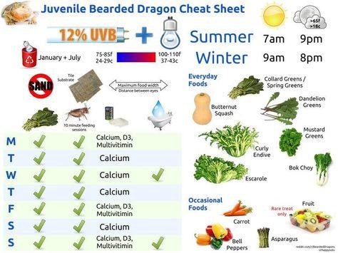 bearded dragon food chart - Google Search