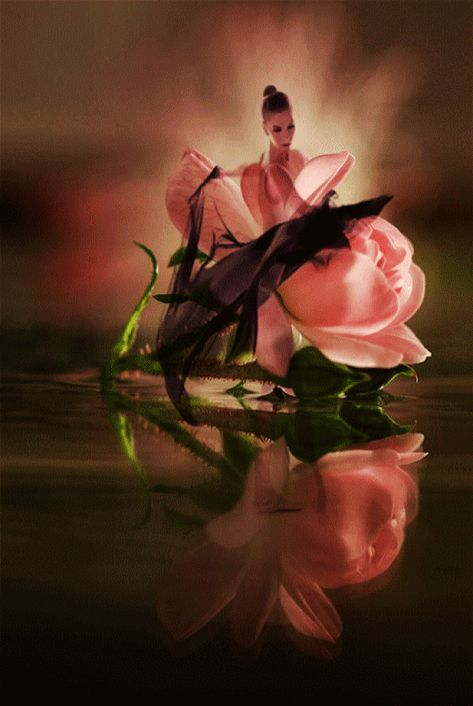 Elegantly dancing through life with grace and beauty of a Rose flowing into a new year!