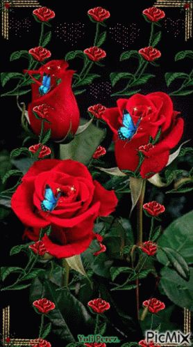 Roses Red Rose GIF - Roses Rose RedRose - Discover & Share GIFs