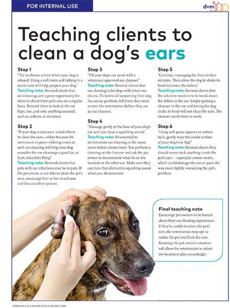 Team Handout Cleaning Dog Ears Cleaning Dogs Ears Pet Health