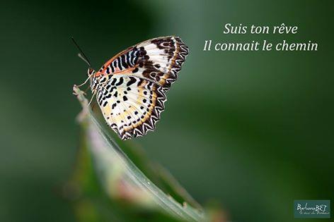 Suis Ton Rêve Il Connaît Le Chemin Barbara Www