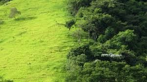 This Article Details How Forest Fragmentation In The Amazon