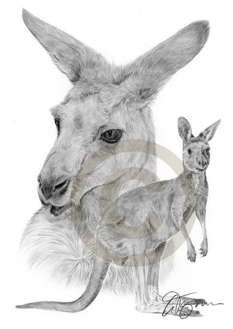 Australische Kanguru Bleistiftzeichnung Druck A3 Grosse