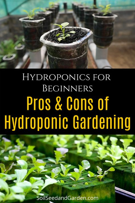 Hydroponics Gardening for Beginners: Pros & Cons